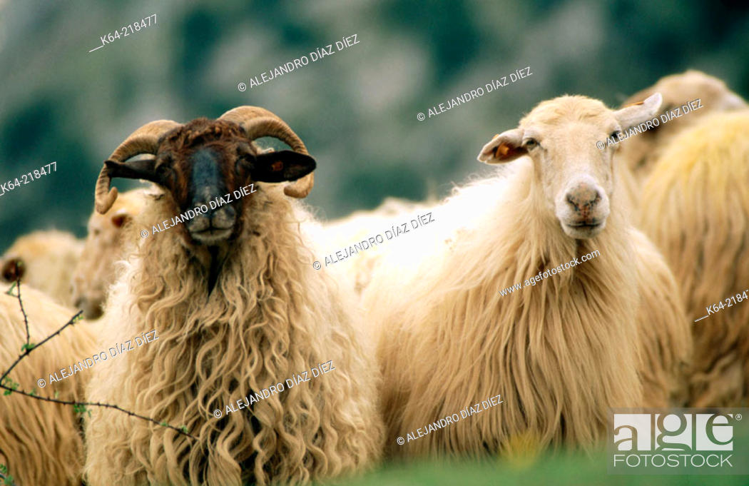 Stock Photo: Agriculture & Farming.