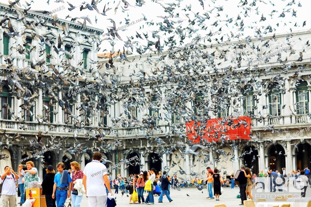 Stock Photo: Pigeons flying in front of a building, St  Mark's Square, Venice, Italy.