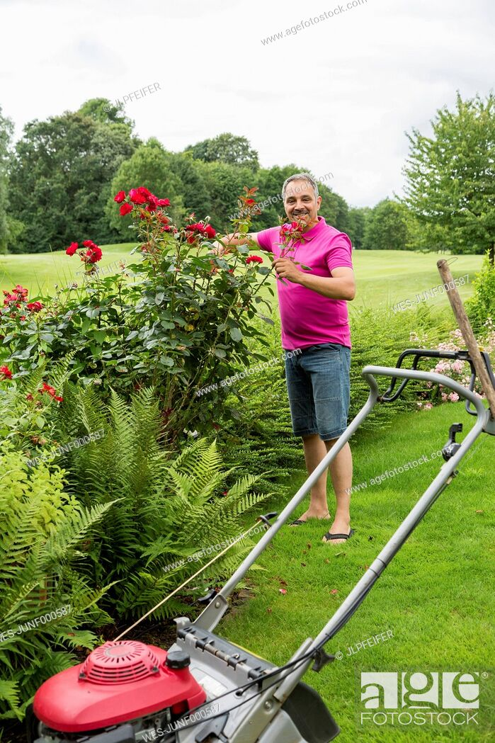 Stock Photo: Smiling man caring for his roses in the garden.