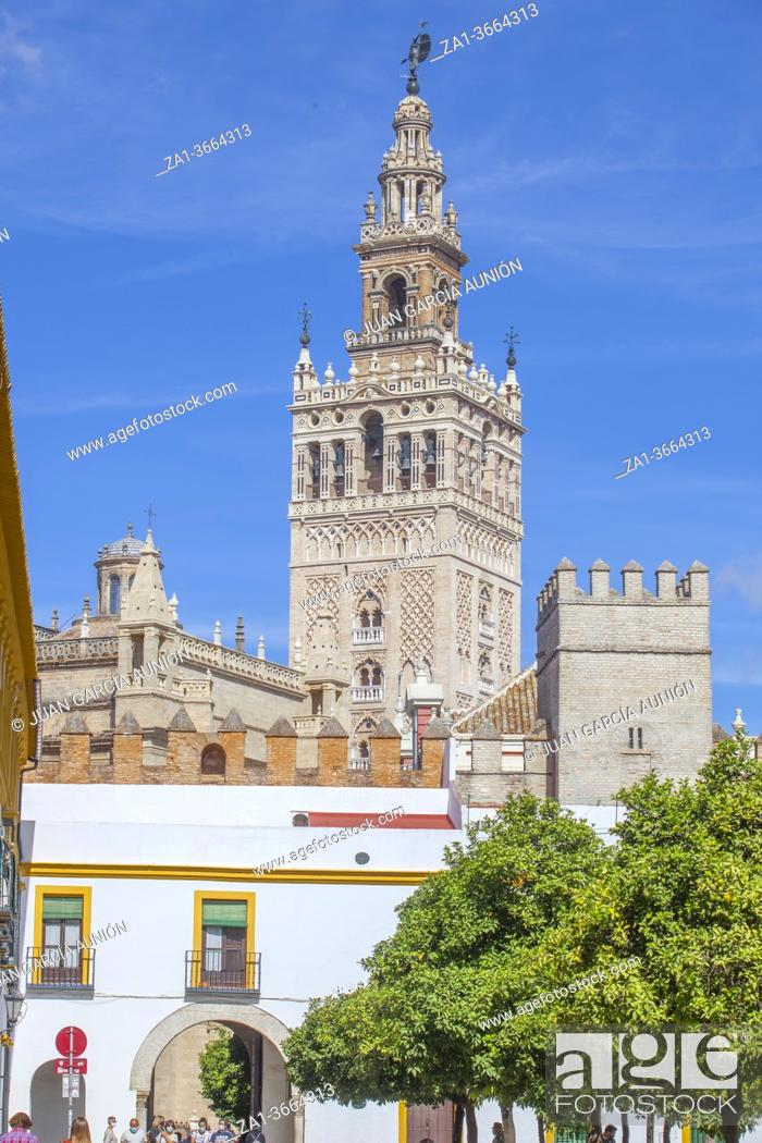 Stock Photo: The Giralda, bell tower of Seville Cathedral top. View from Alcazar orange trees courtyard. Seville, Spain.