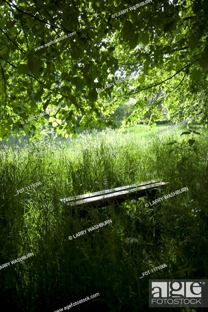 Stock Photo: A bench amongst lush foliage in a remote natural setting.