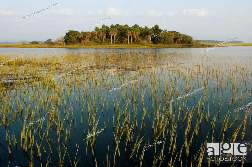 Stock Photo: landscape of marsh Island in the broad river.