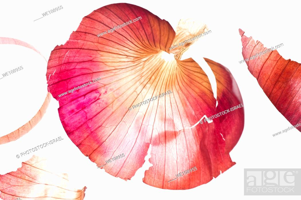 Stock Photo: Backlit onion skin On white Background.