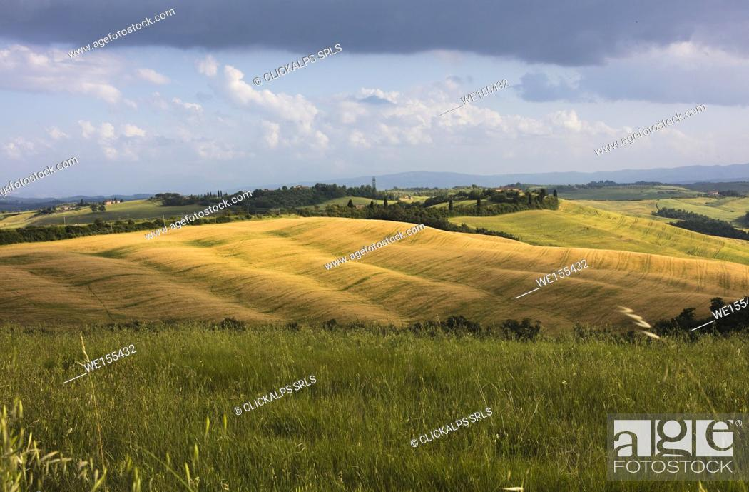Stock Photo: Green rolling hills and grass in the rural landscape of Crete Senesi (Senese Clays) province of Siena Tuscany Italy Europe.