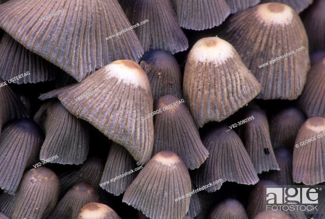 Stock Photo: Mushrooms, Willamette Mission State Park, Oregon.
