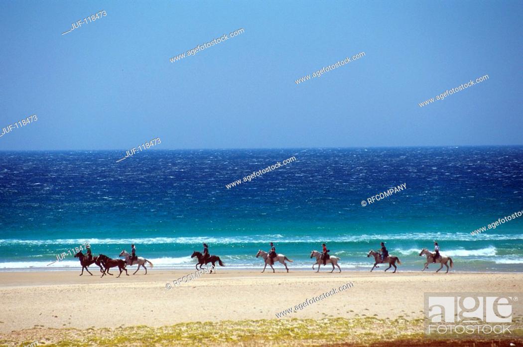 Stock Photo: Arabian horses with riders at the beach.