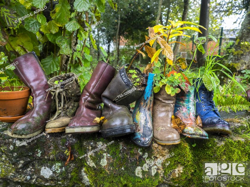 Stock Photo: Trees planted in boots on a wall. Chantada. Lugo. Galicia. Date: 2018-11-09.