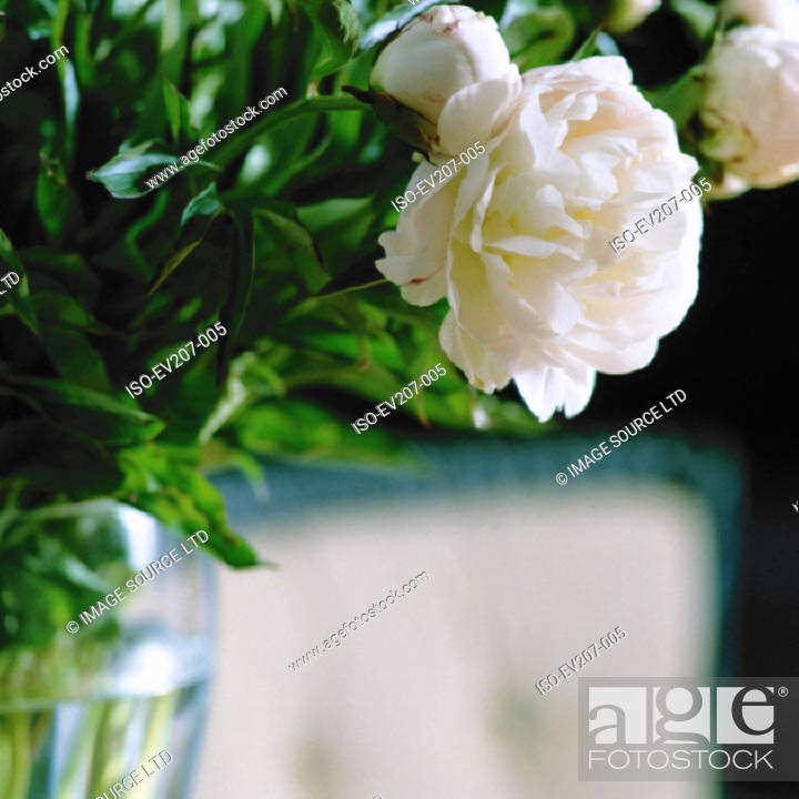 Stock Photo: Bunch of flowers.