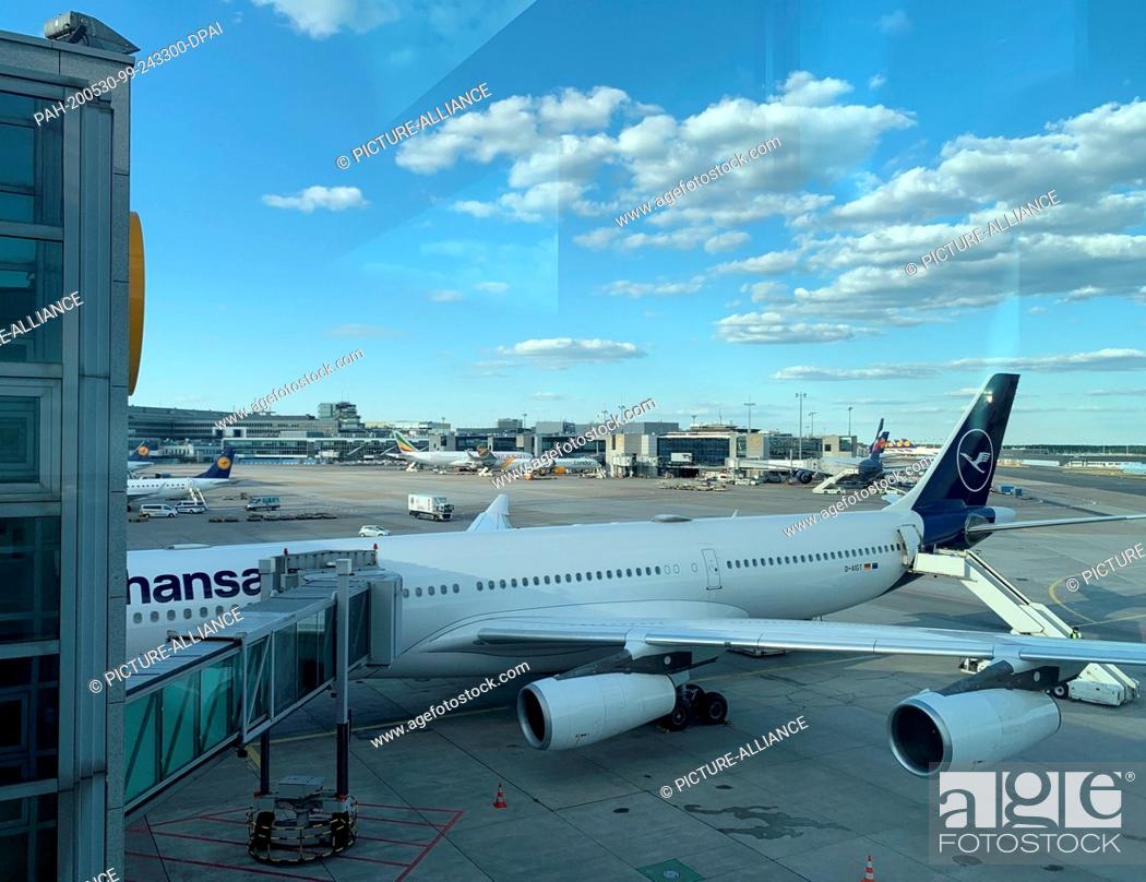 Stock Photo: 29 May 2020, Hessen, Frankfurt/Main: A Lufthansa aircraft is standing by at Frankfurt Airport for a special flight to Tianjin, China.
