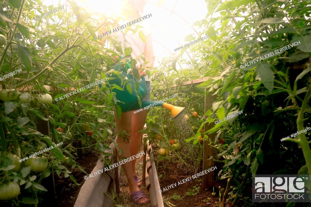 Imagen: Woman using watering can to water plants in greenhouse.