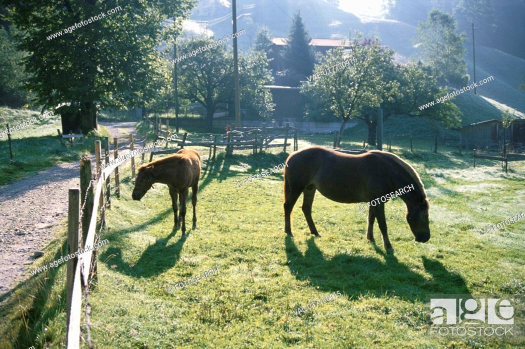 Stock Photo: Two Horses In Hokkaido.