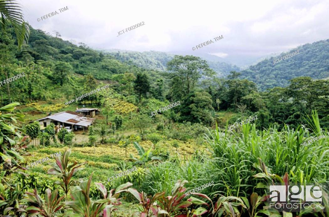 Stock Photo: Costa Rica, farm in the mountains.