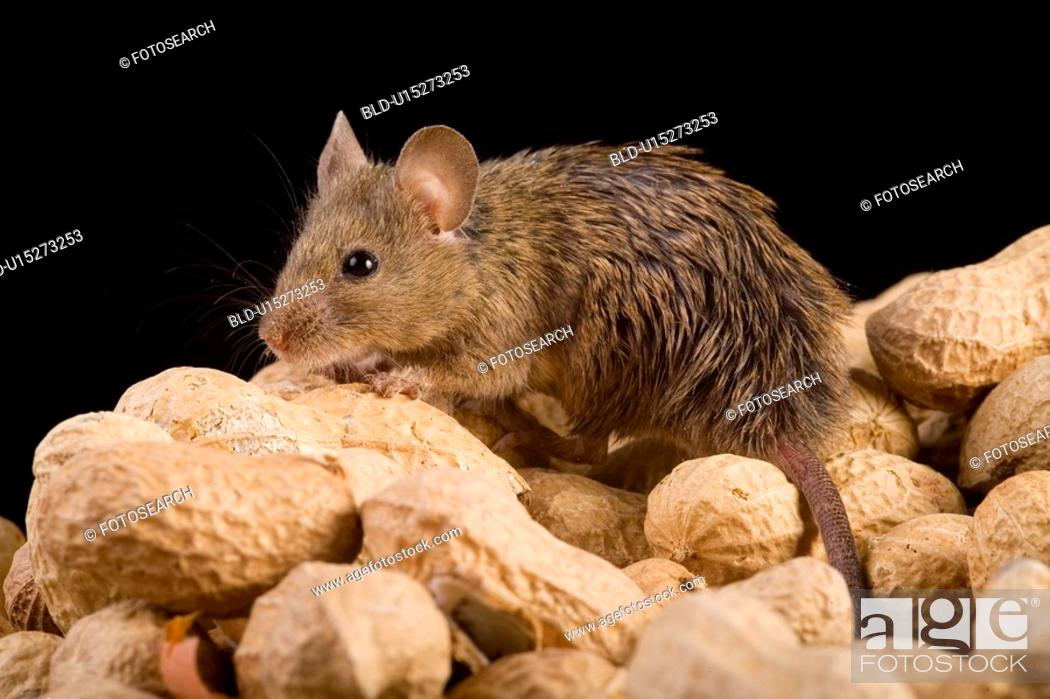 Stock Photo: tierportraits, alfred, aliment, animal, animal portrait, animals.