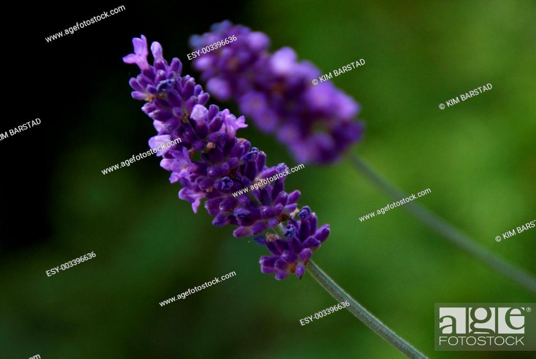 Stock Photo: Summer flower.