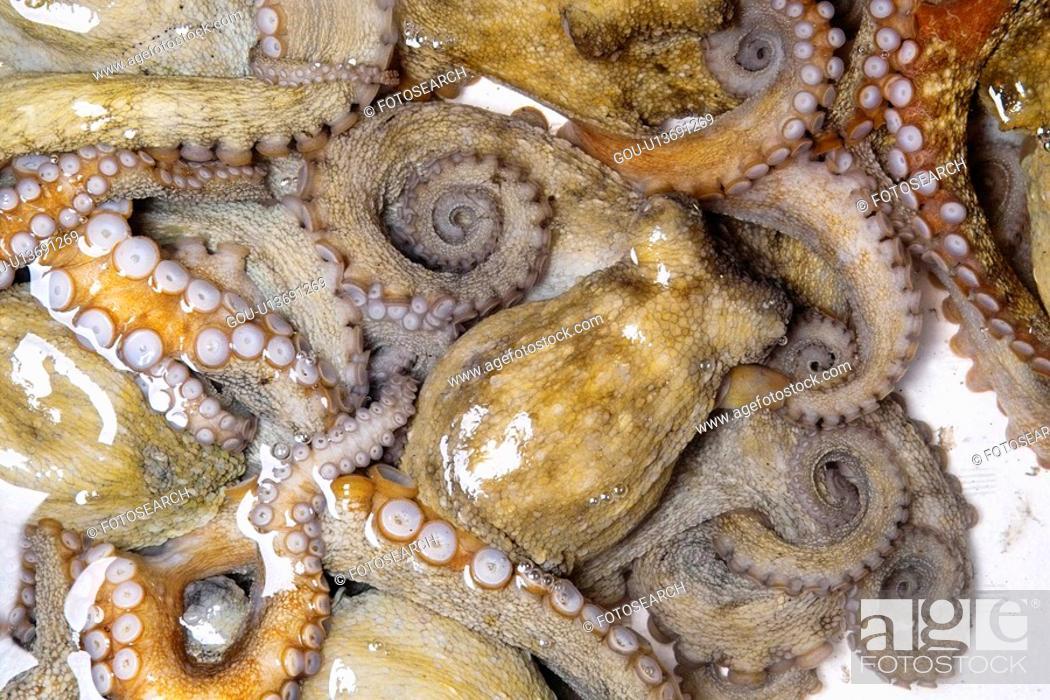 Stock Photo: Common octopus.