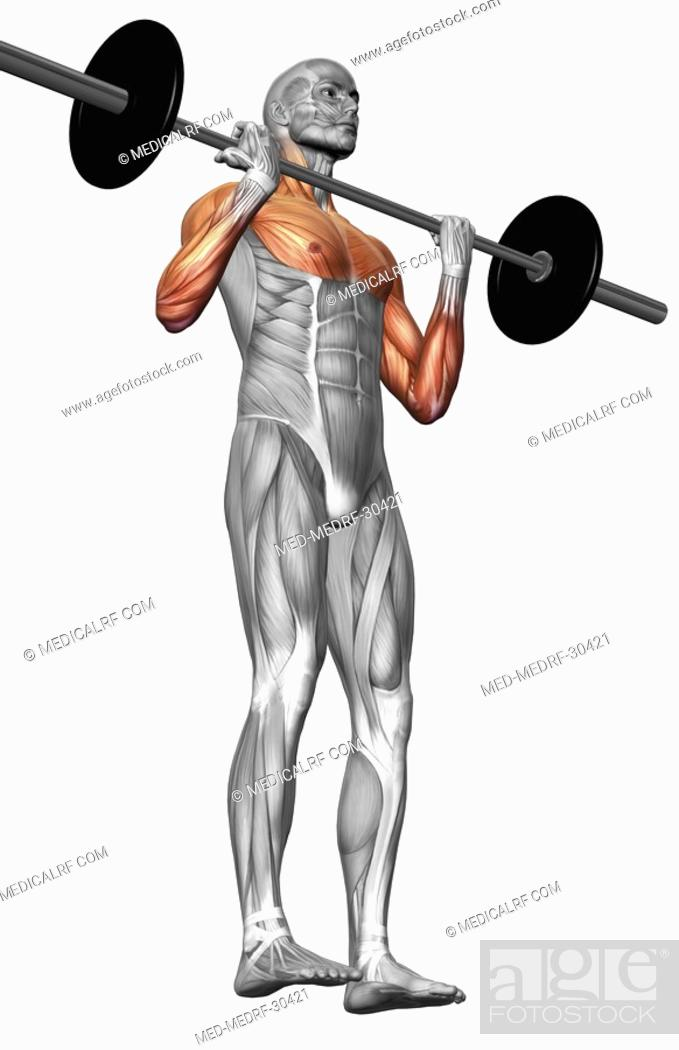 Stock Photo: Biceps curl Part 1 of 2.