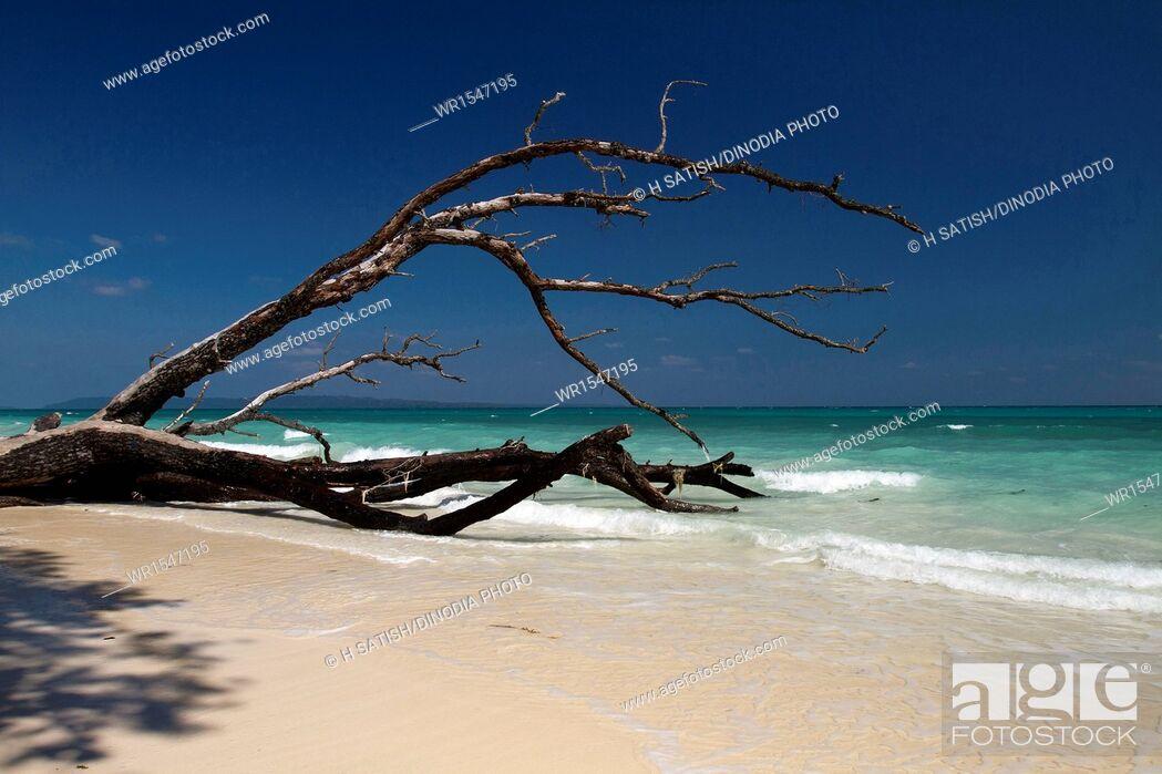 Imagen: Seascape Kalapathar Beach Havelock island Andaman India Asia.