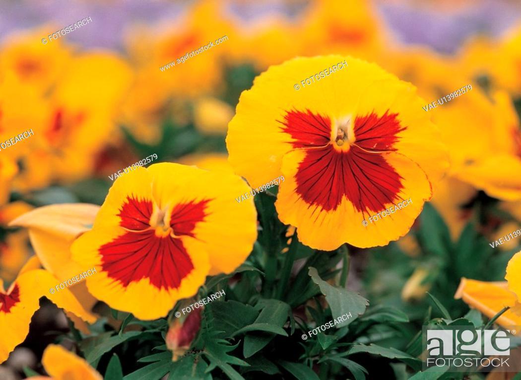 Stock Photo: plants, nature, background, flower, plant, film.