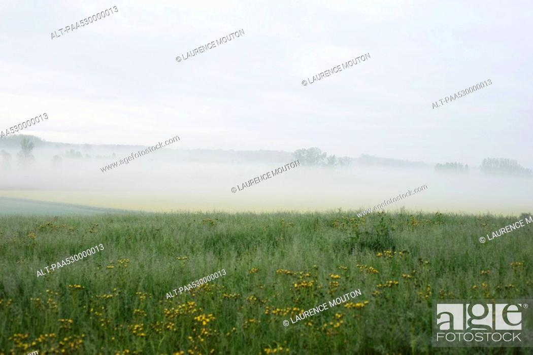 Stock Photo: Wildflowers in meadow, fog in background.