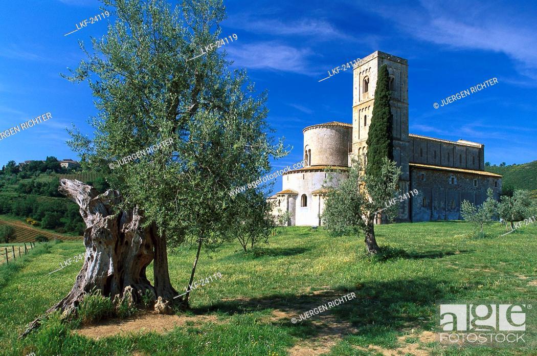 Olive Tree Monastery Sant Antimo