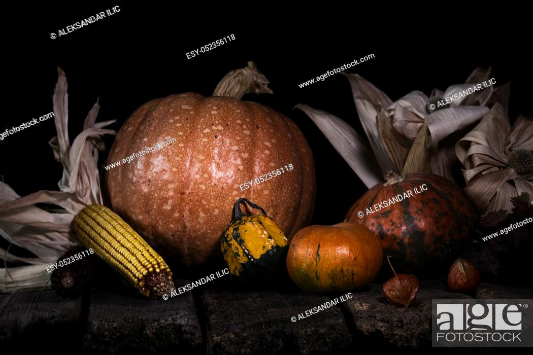 Stock Photo: Autumn Pumpkins and Corn On a Rustic Wooden Surface. Thanksgiving Day Concept.