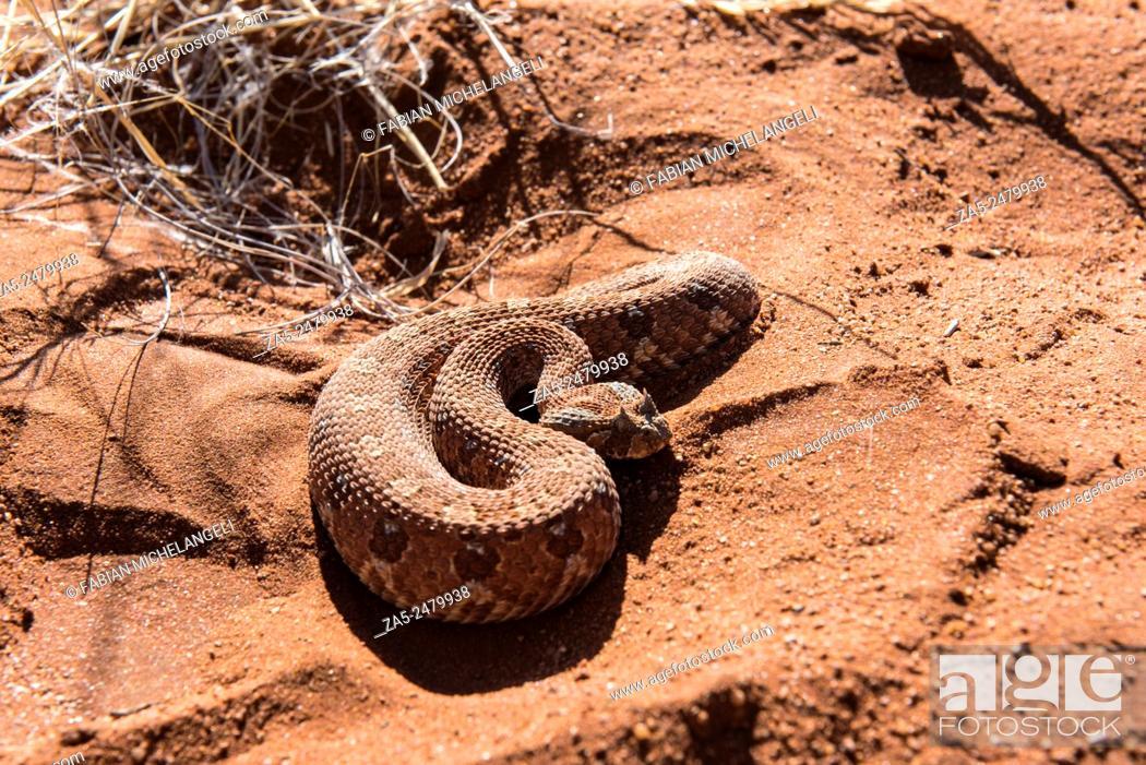 Imagen: Side-winding Adder. Namib Desert, Namibia.
