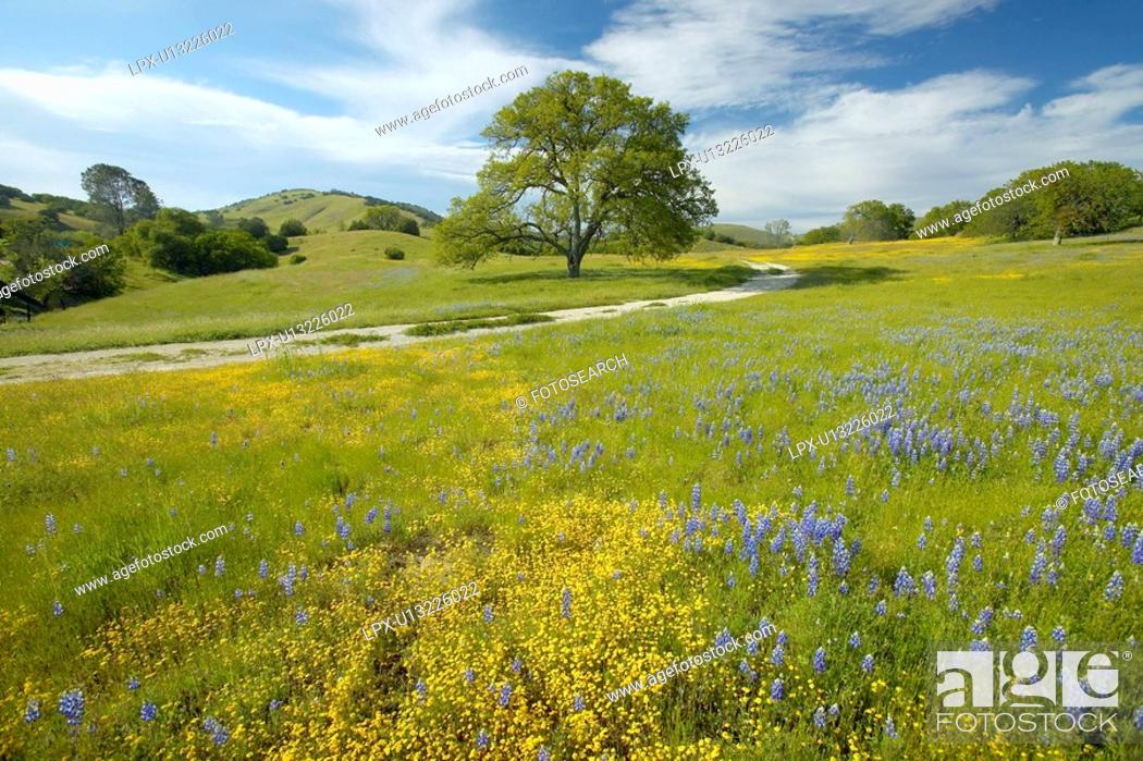 Stock Photo: Lone tree and colorful bouquet of spring flowers blossoming.