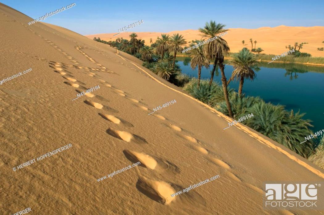 Stock Photo: Oasis, Libya.