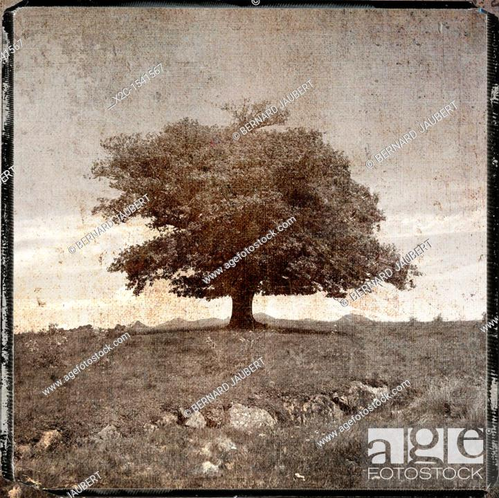 Stock Photo: Tree, textured.