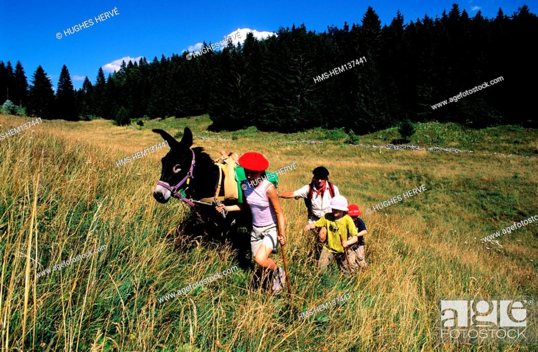 Stock Photo: France, Jura, les Moussieres, a hiking with family on donkey.