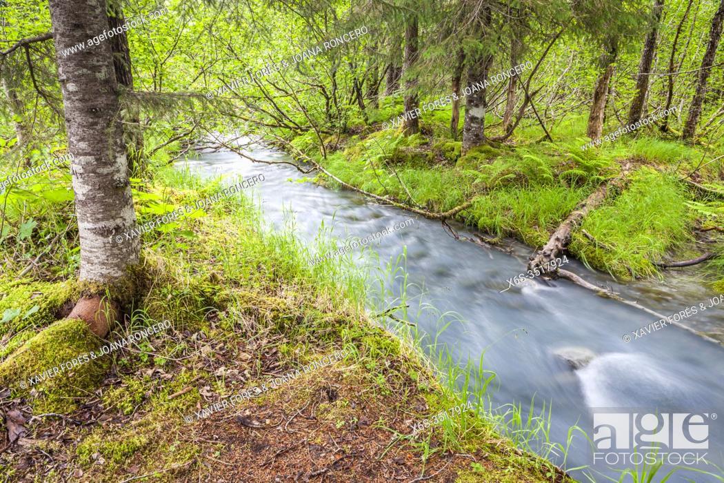 Imagen: Chugach National Forest, Portage valley, Alaska, U. S. A.