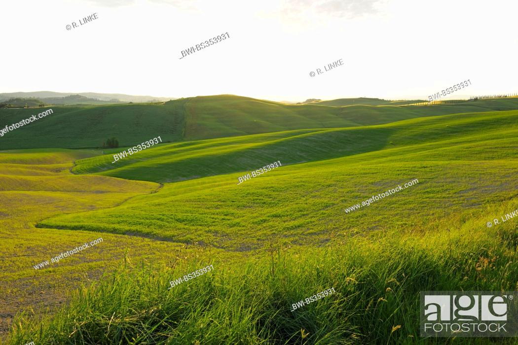 Stock Photo: hilly meadows in spring in the erosion landscape of the Crete Senesi, Italy, Tuscany, Monteroni d' Arbia.
