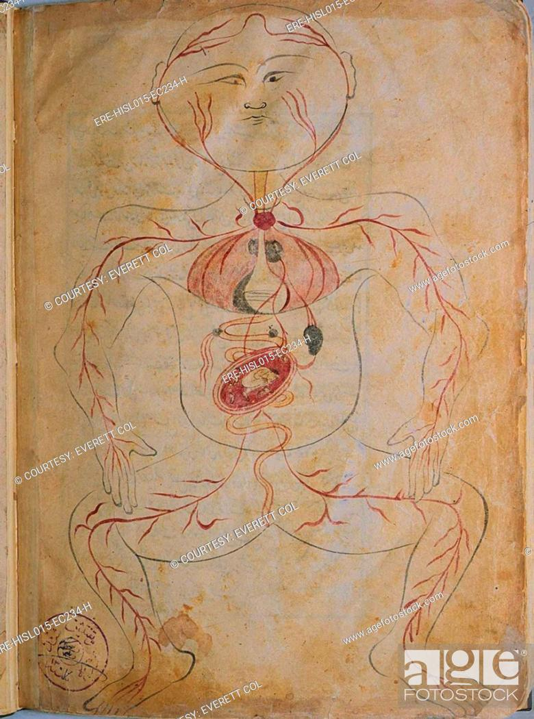 A Pregnant Woman From Mansurs Anatomy Authored By The Persian