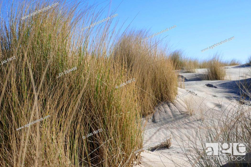 Stock Photo: newly formed dunes at the zandmotor in Den Haag, Holland.