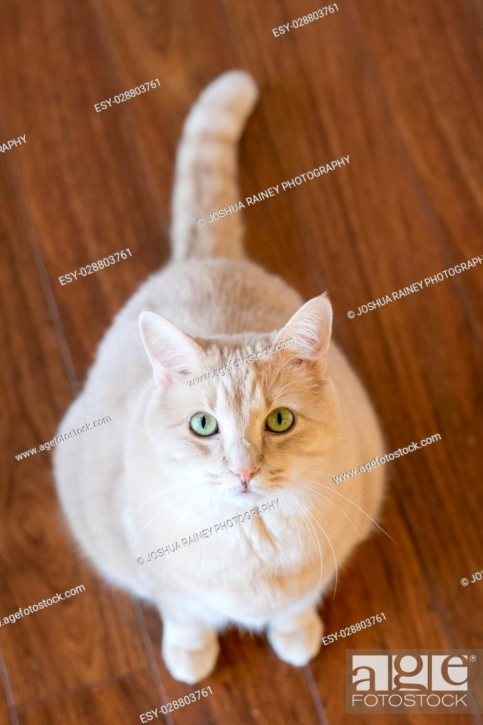 Stock Photo: Domestic pet cat indoors looking up at the camera.
