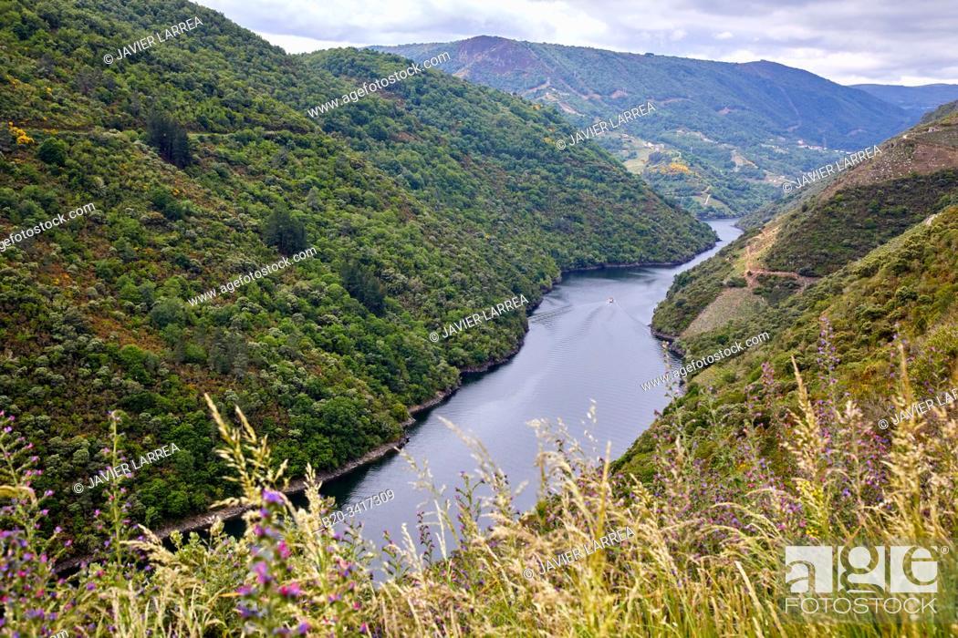 Stock Photo: Ribeira Sacra, Heroic Viticulture, Sil river canyon, Doade, Sober, Lugo, Galicia, Spain.
