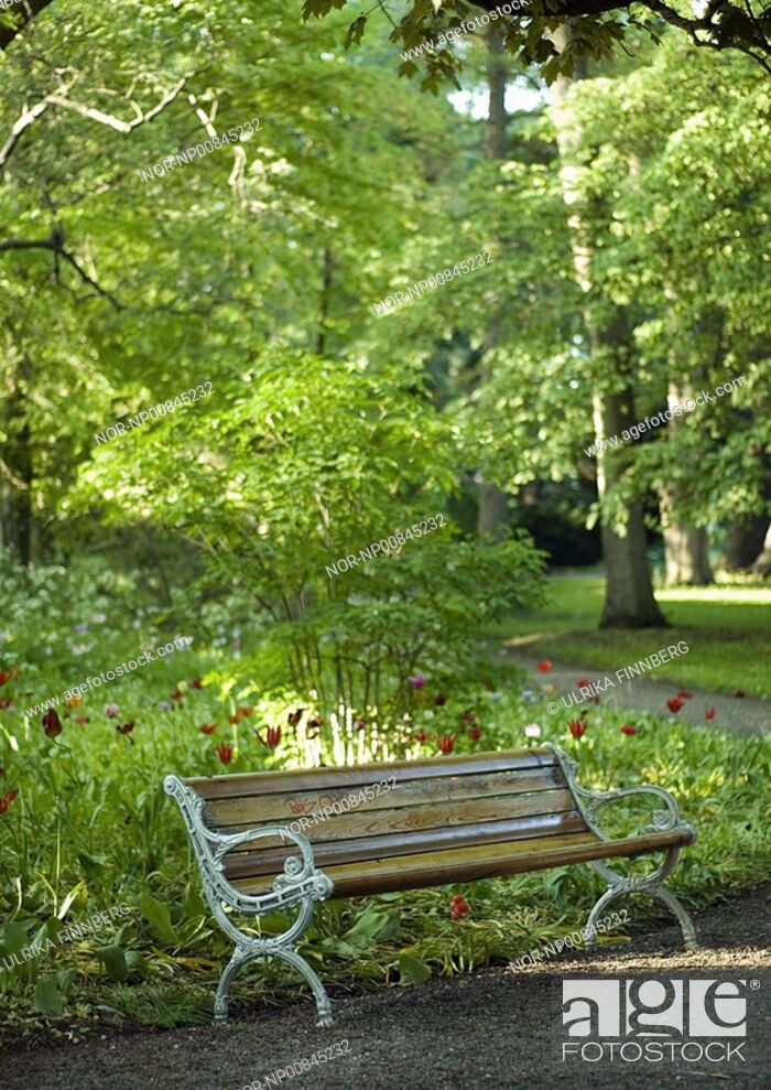 Stock Photo: Empty bench in a park in summertime.