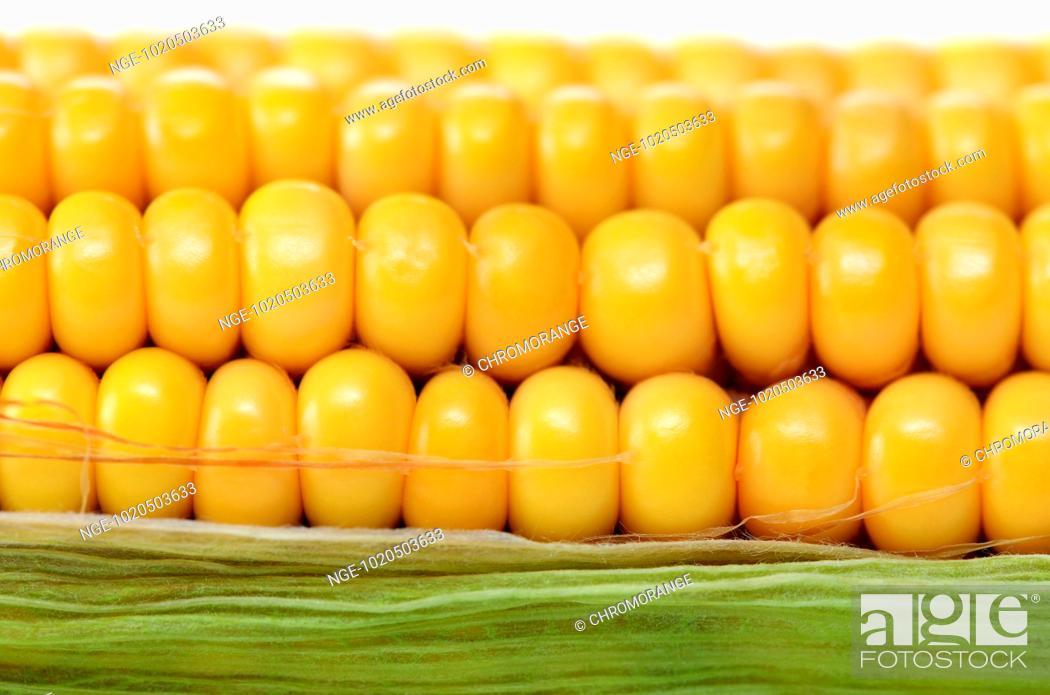 Imagen: Corn, Zea mays.