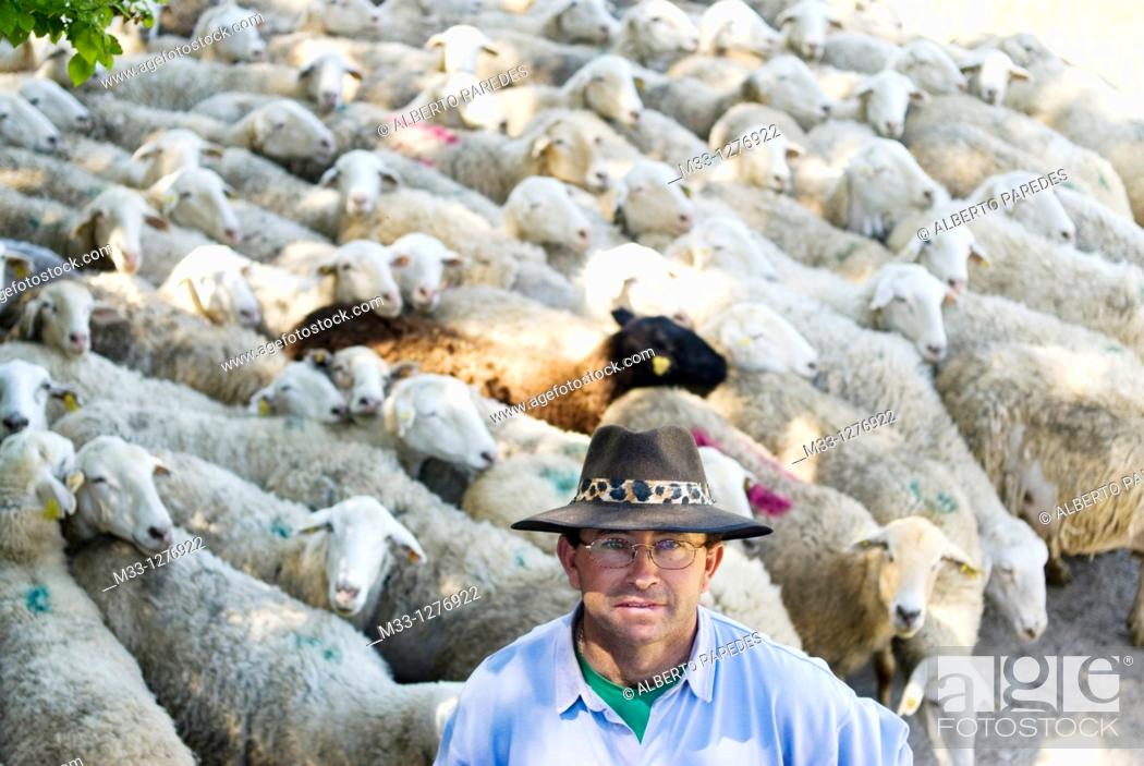 Stock Photo: Sheep shepherd in Casasana, Alcarria, Guadalajara province, Castilla-La Mancha, Spain.