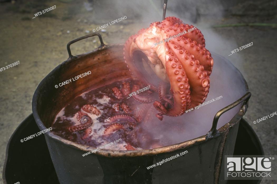 Stock Photo: Cooking octopus in copper cauldron, SANTIAGO DE COMPOSTELA, GALICIA, SPAIN, EUROPE.