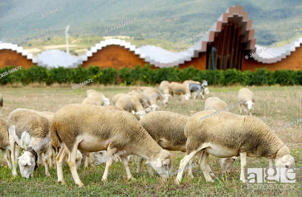 Stock Photo: Ysios winery building design by Santiago Calatrava. Laguardia, Rioja alavesa. Alava, Euskadi, Spain.