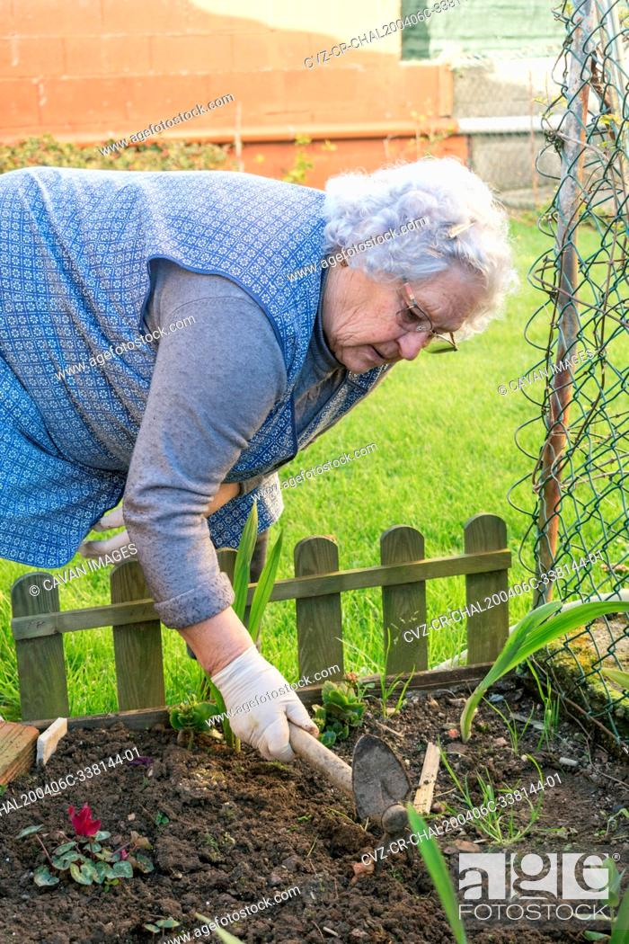 Stock Photo: Old woman works the soil in the home garden with a small hoe.