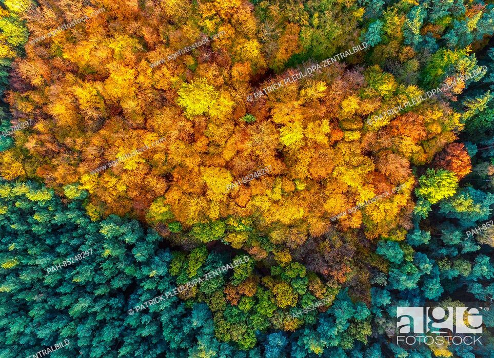 Stock Photo: An aerial picture with a drone shows the fall foliage amongst pine trees near Sieversdorf, Germany, 30 October 2016. Photo: Patrick Pleul | usage worldwide.