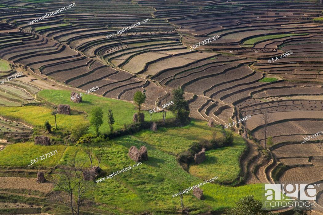 Imagen: Cultivation terraces at Balthali village 40 kilometres from Kathmandu Nepal.