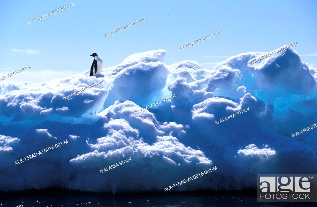 Stock Photo: Adelie Penguin Standing on Iceberg Antarctica.