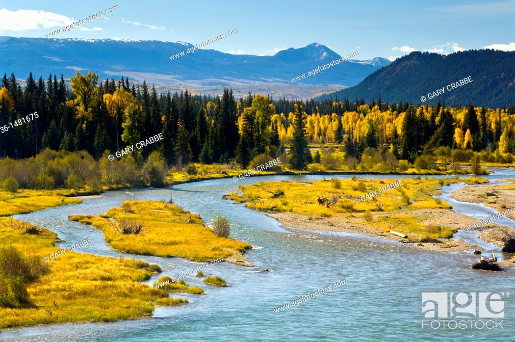 Stock Photo: Fall colors on aspen and cottonwood trees along the Snake River, Grand Teton National Park, Wyoming.