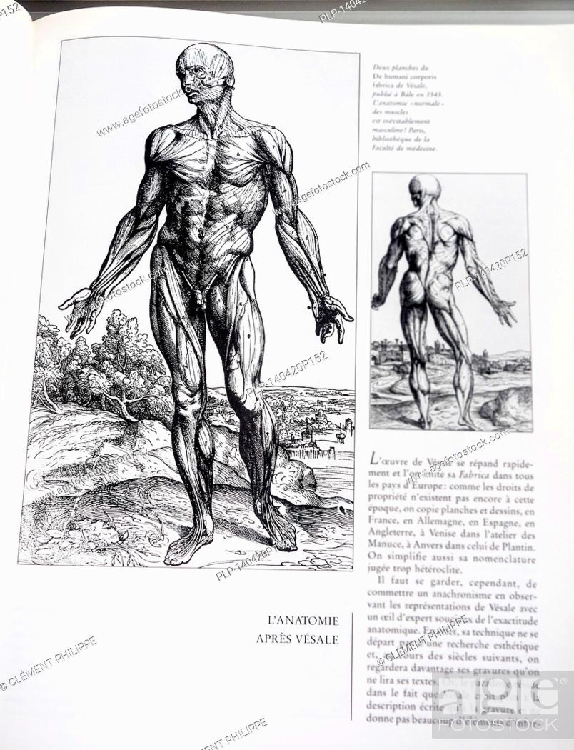 Book With Detailed Illustrations On Human Anatomy De Humani