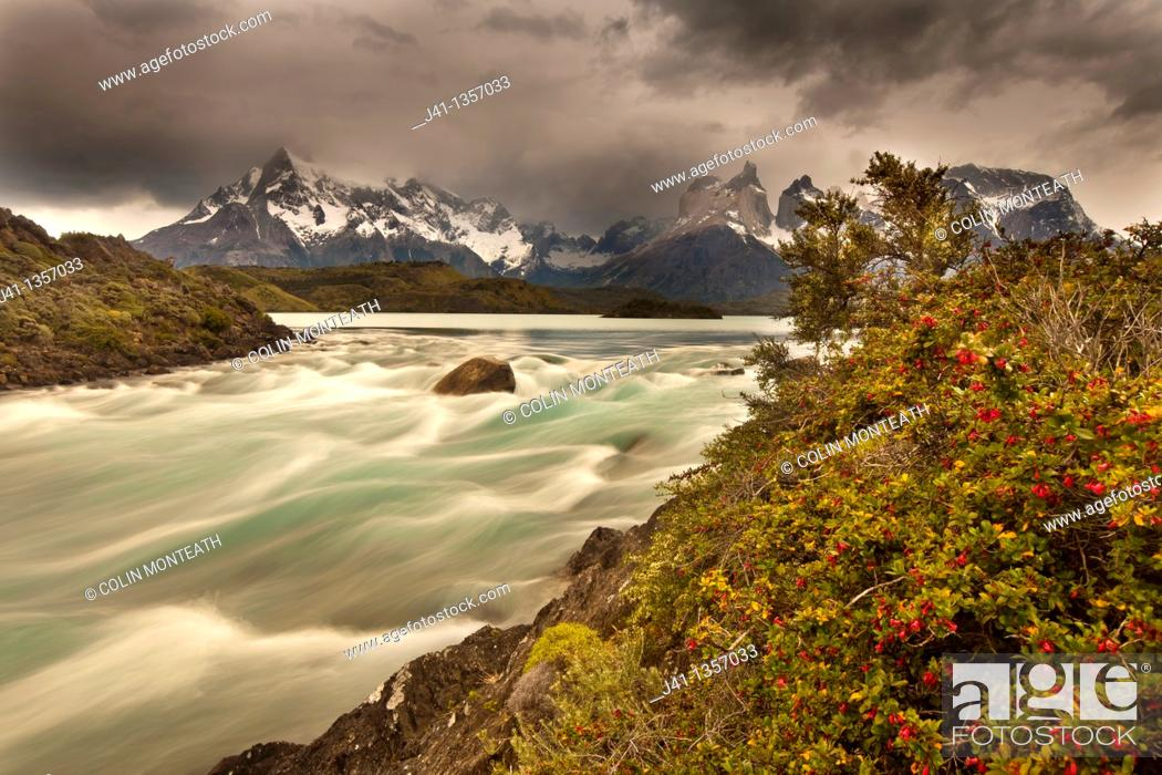 Stock Photo: Rainstorm engulfs Cuernos del Paine peaks, Lago Pehoe rapids, 'Seven shirts - siete camisas colorado' in flower Escallonia rubra.