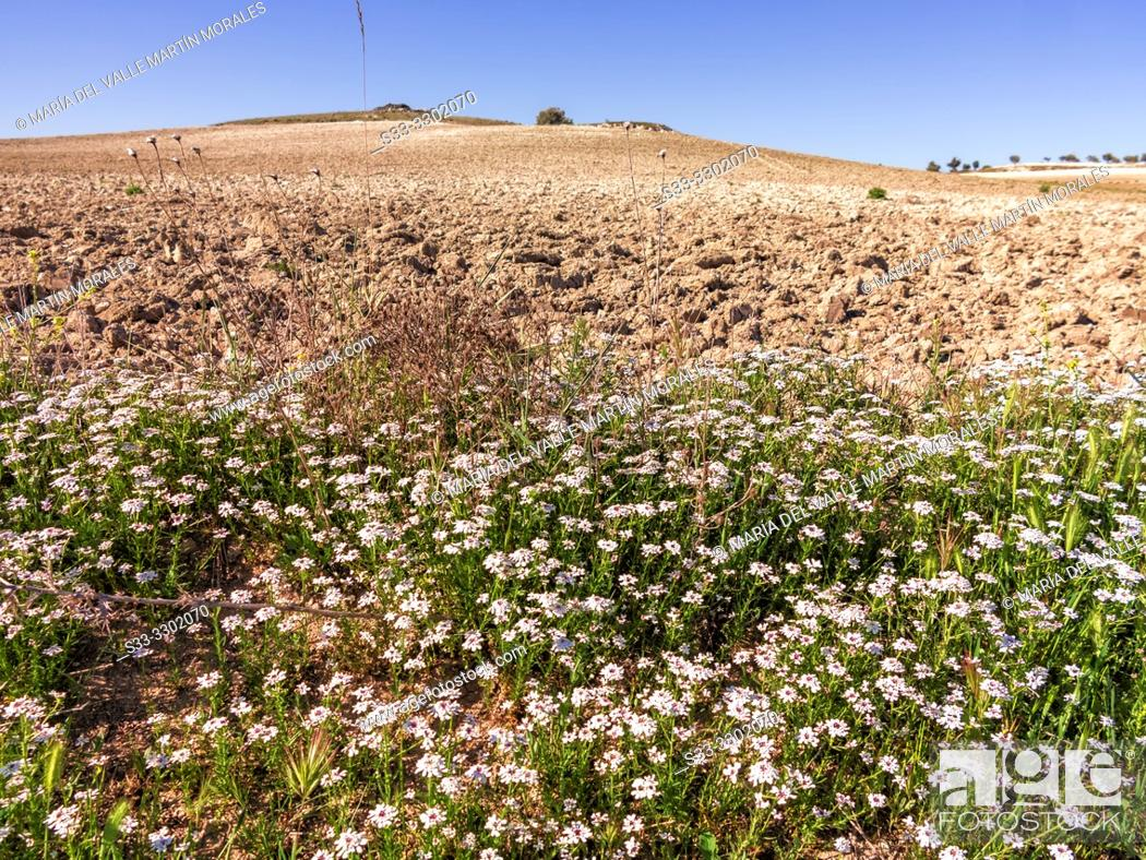 Stock Photo: Spring in The Areneros path. Pinto. Madrid. Spain. Europe.