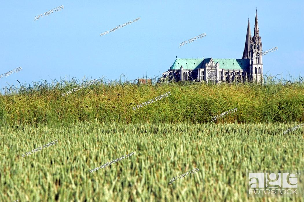 Imagen: CHARTRES NOTRE-DAME CATHEDRAL SEEN FROM THE WHEAT FIELDS, EURE-ET-LOIR 28, FRANCE.